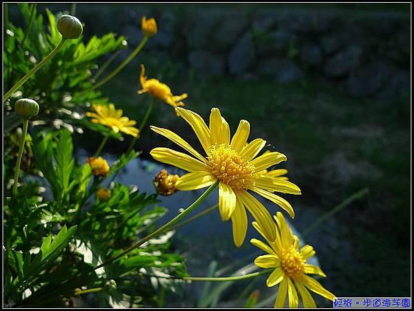 連路邊的黃色小花也努力展現它的美.jpg
