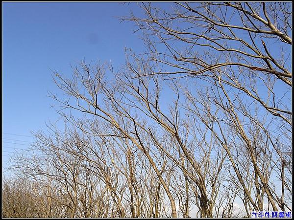 冬陽藍天.jpg