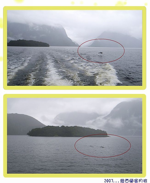 蒂阿瑙-道佛峽灣,有鯨群出現.jpg