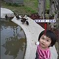 跑到池邊,鴨子嚇的逃跑.jpg