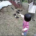 在小山坡上,發現野鴨成群.jpg