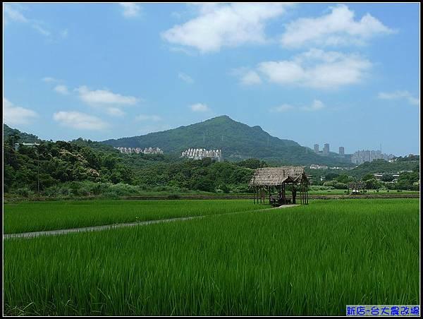 一眼望去綠油油的稻田,心情輕鬆自在。.jpg