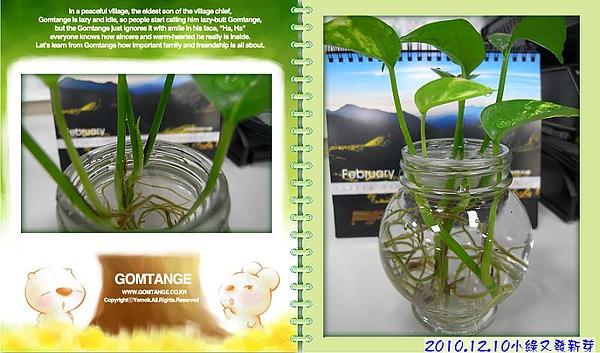 2010.12.10小綠又發新芽.jpg
