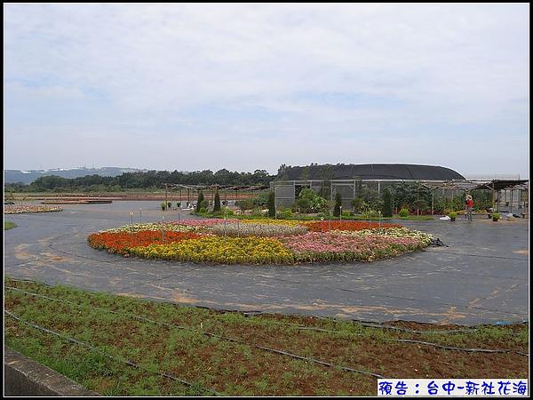 1016-1107為期四週的新社花海.jpg