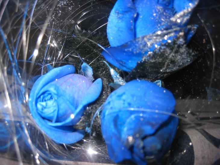 FLOWER 005.jpg