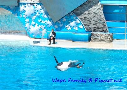 Sea World 032.jpg