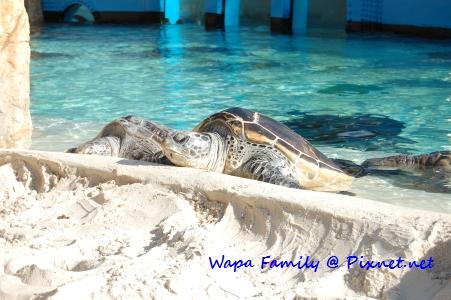 Sea World 105.jpg