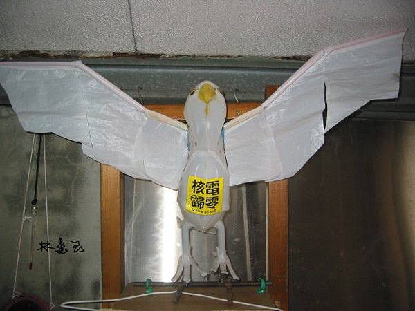 抗意核電鷹
