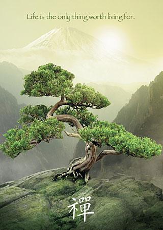 Zen Baum.jpg