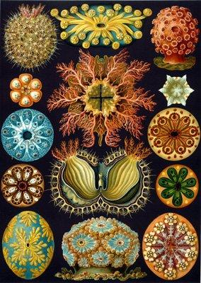 artifact:Haeckel Sea Squirts Wooden Jigsaw Puzzle.jpg