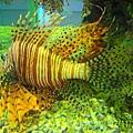 獅子魚1.jpg