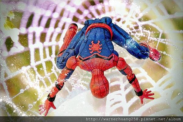 spider web 33114_Fotor.jpg