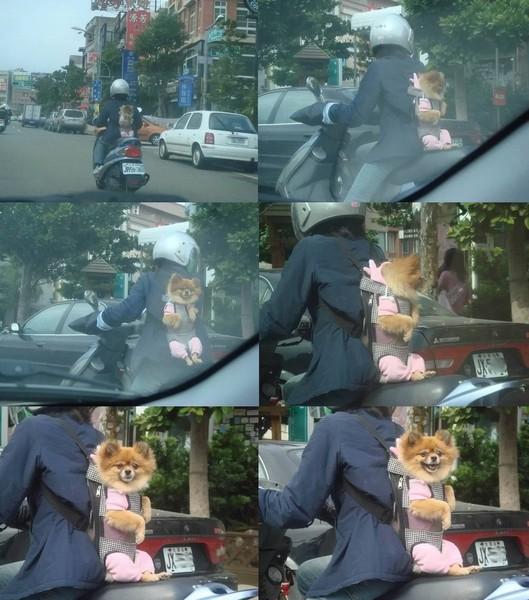 被騎機車主人背的狗狗好可愛還會笑哩!.jpg