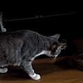 貓咪自動給食機.jpg
