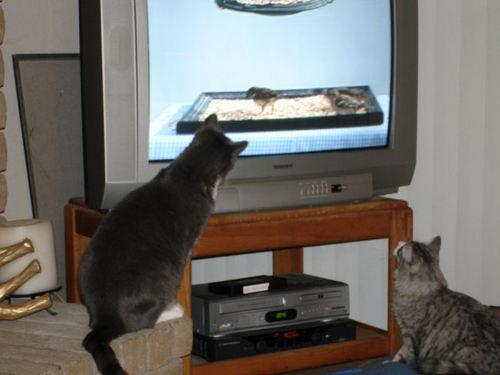 001_cats.jpg