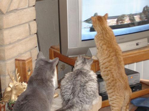 002_cats.jpg
