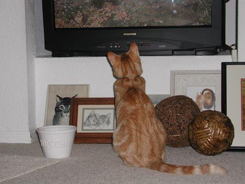 003_cats.jpg