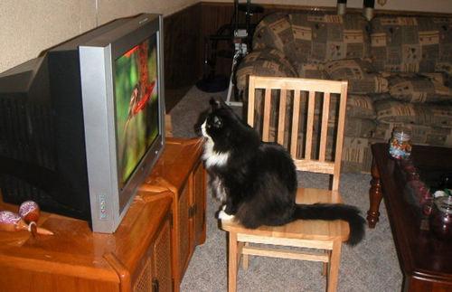 005_cats.jpg
