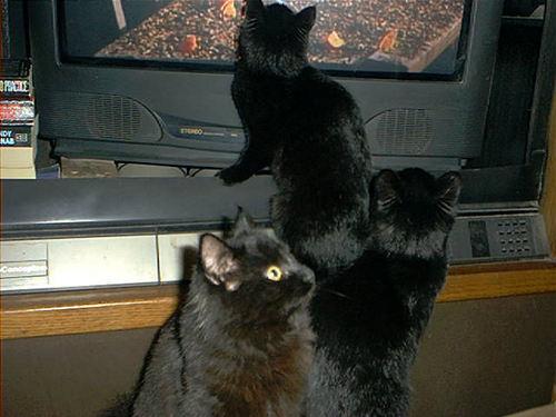 007_cats.jpg