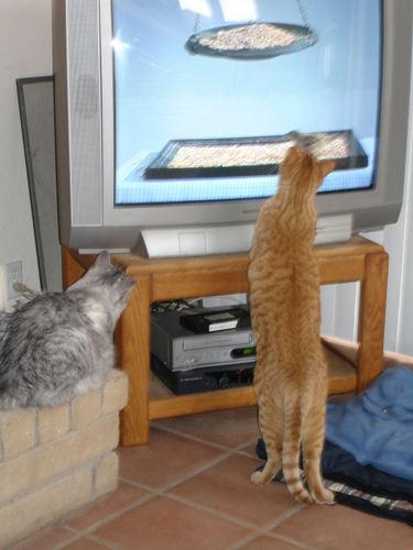 008_cats.jpg