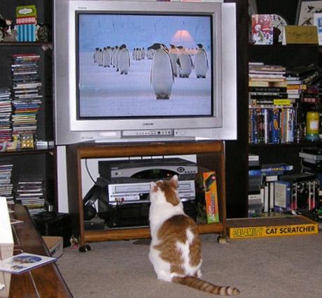 010_cats.jpg