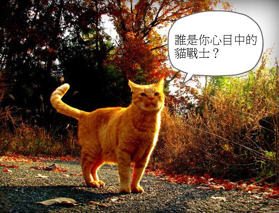 尋找貓戰士