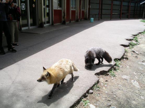 41_狐狸村
