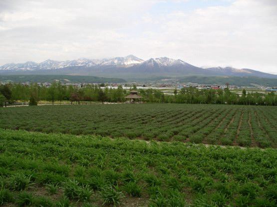 51_富田農場