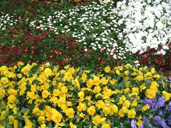 73_大通公園花圃