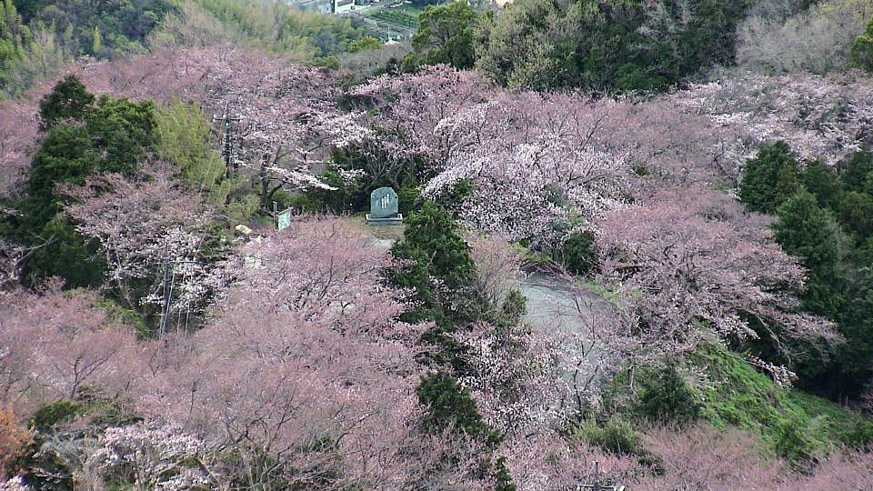 日本愛媛縣上島町 - 積善山櫻花