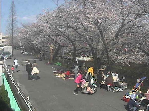 五条川賞櫻步道大口町段