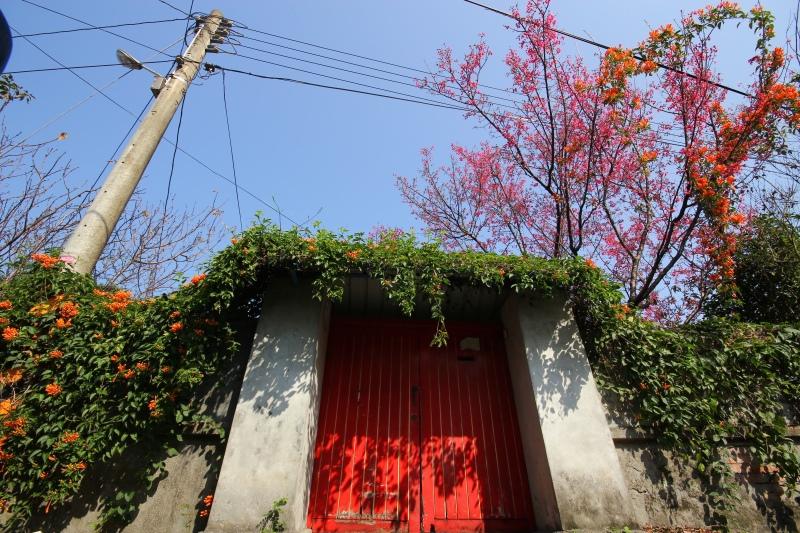 樟仔園的紅門花影04.jpg
