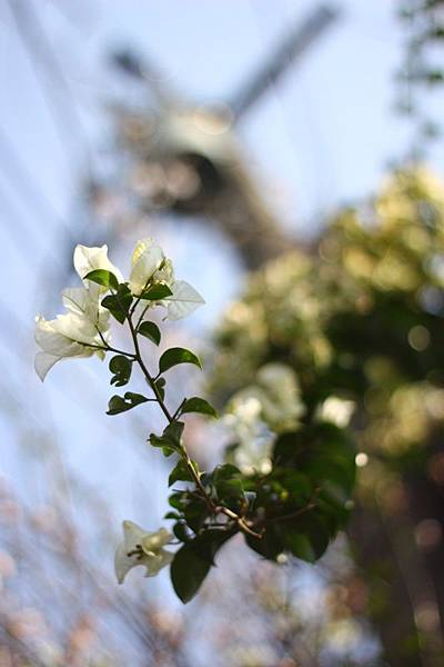 樟仔園的紅門花影03.jpg