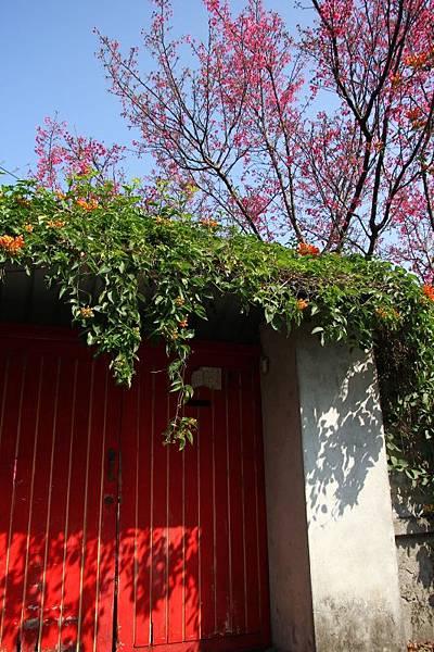 樟仔園的紅門花影05.jpg