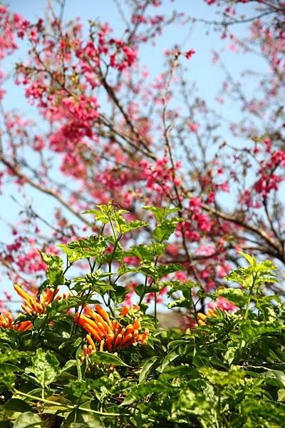 樟仔園的紅門花影06.jpg