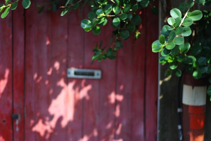 樟仔園的紅門花影09.jpg