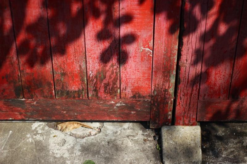 樟仔園的紅門花影12.jpg