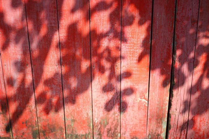 樟仔園的紅門花影13.jpg