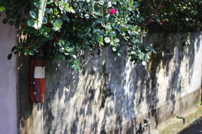 樟仔園的紅門花影14.jpg