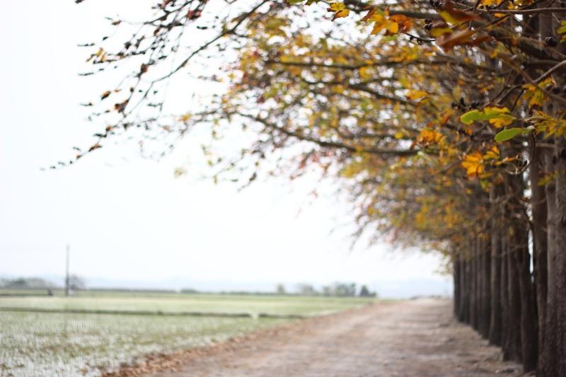 溪洲裡的木棉道06.jpg