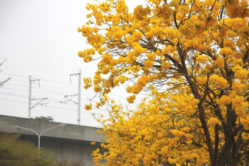 溪洲風鈴木06.jpg