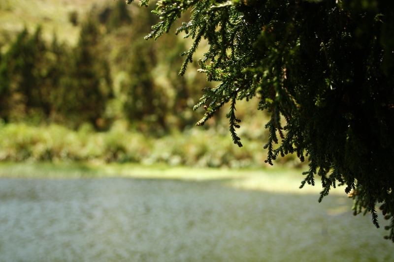 陽明山夢幻湖14.jpg