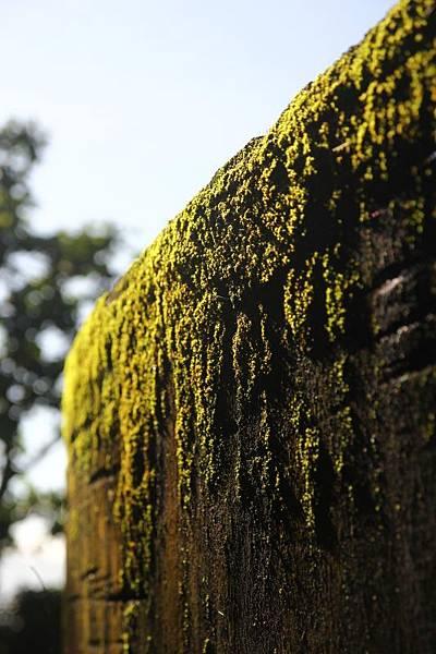 冬雨後的綠意06.jpg
