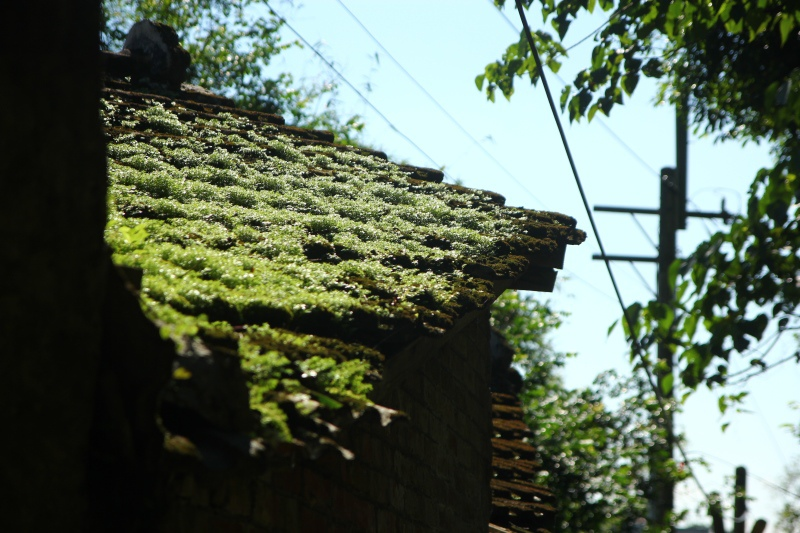 冬雨後的綠意05.jpg