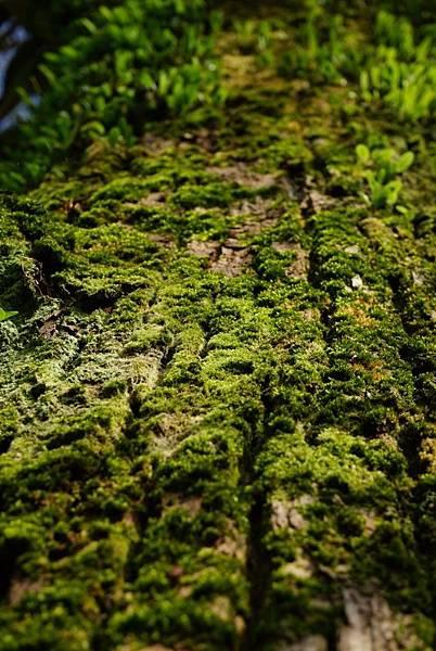 冬雨後的綠意08
