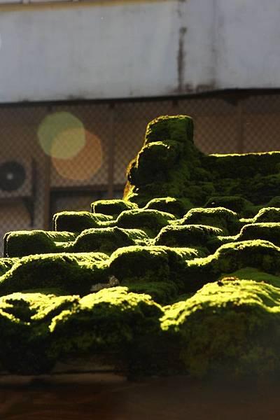 冬雨後的綠意09