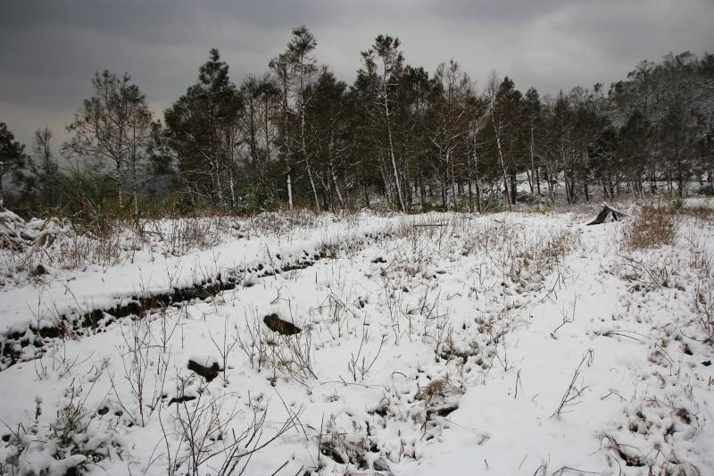 1月24日那場雪10.jpg