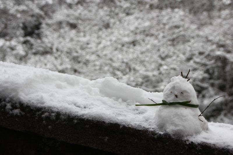 1月24日那場雪12.jpg