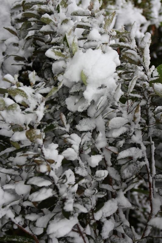 1月24日那場雪13.jpg