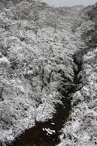 1月24日那場雪15.jpg
